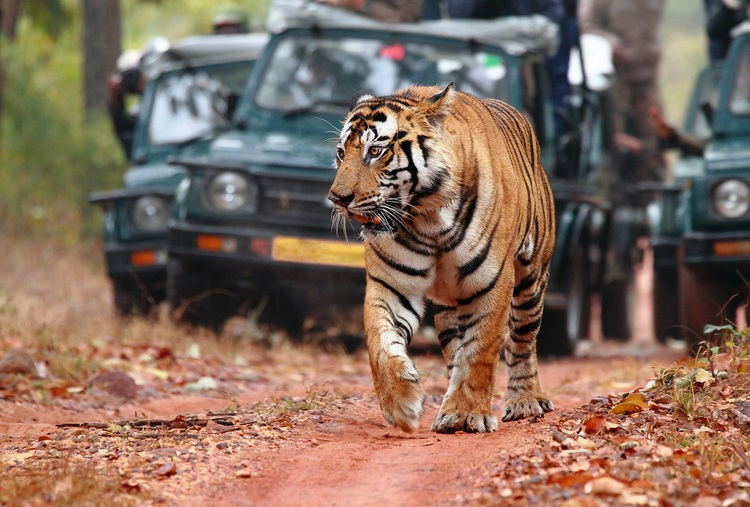 UDAIPUR-CHITTORGARH-RANTHAMBORE IN TIGER EXPRESS