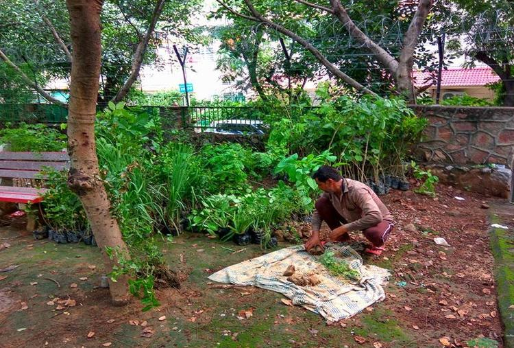 PLANT A PATCH AND HELP DETOXIFY DELHI