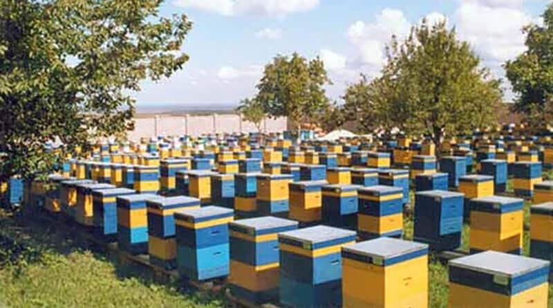 Форум пчеловодство как бизнес
