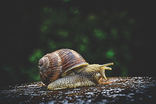 Free images of snails
