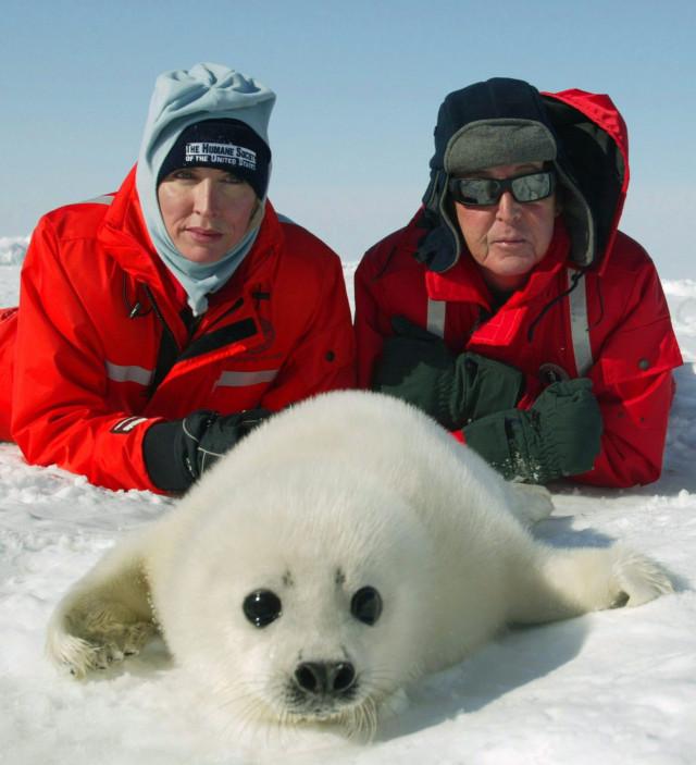 Canada killing baby seals