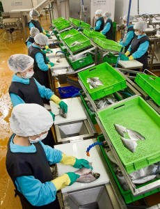 Оборудование переработка рыбы