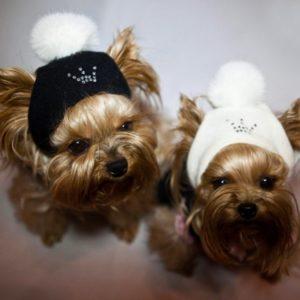 Для собаки шапочка