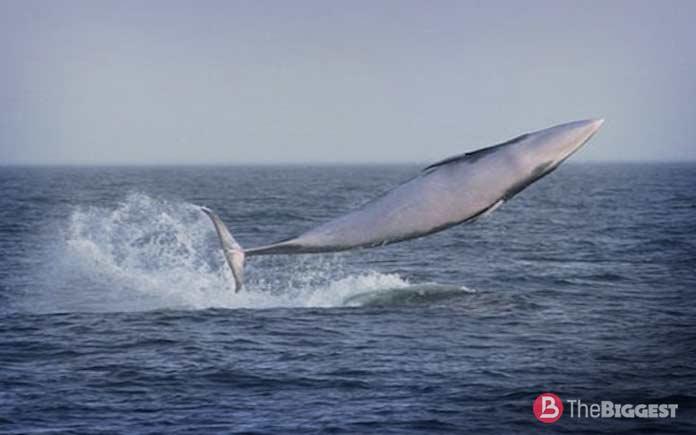 Таблица размеров китов
