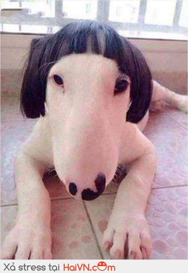 Người ta nói xấu như chó nhưng cái loại này thì không có ngôn từ nào tả nổi...