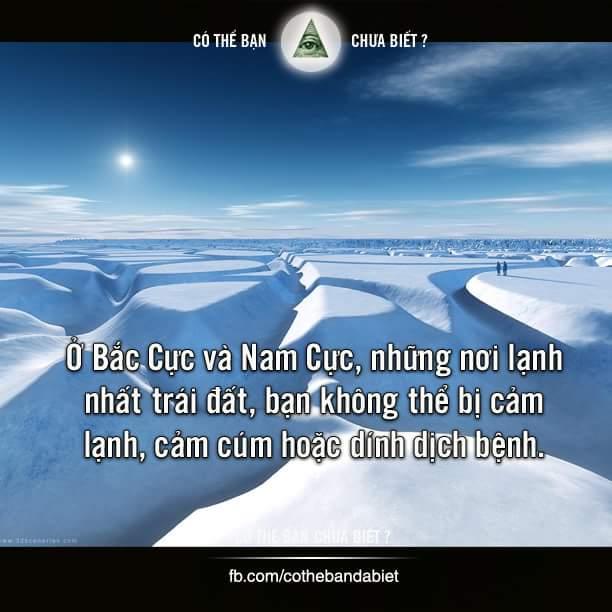 Ở Bắc Cực và Nam Cực, những nơi lạnh nhất trái đất, bạn không thể bị cảm lạnh, cảm cúm hoặc...