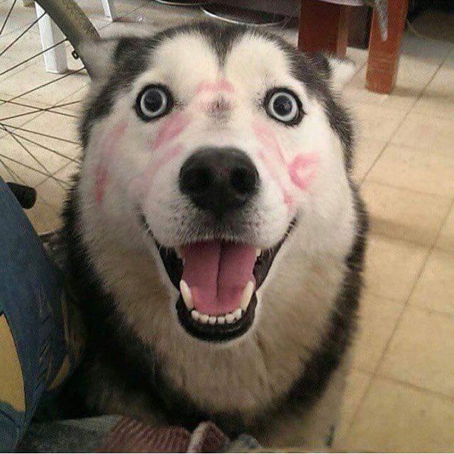 14/2 mà mình ếu bằng con chó, nó còn có người hôn.