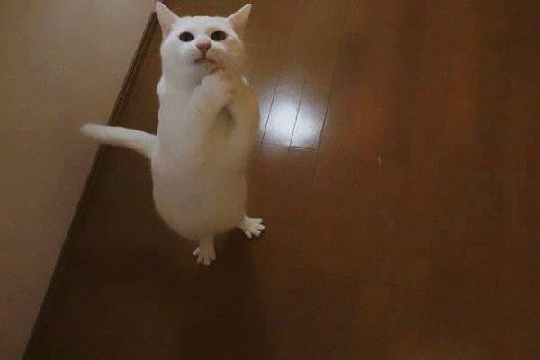 Những tư thế võ mèo cổ truyền. :v  //Fvideo