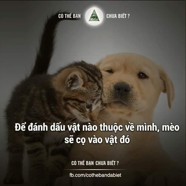 Đây là lý do mèo hay cọ vào người