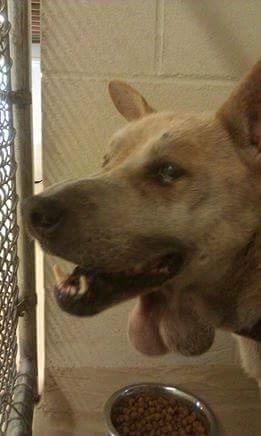 Chú chó có hai khối u giống tinh hoàn treo lủng lẳng trước cổ!  Được biết, hai khối u tuyến...