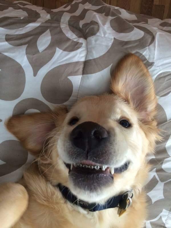 Ăn đu đủ không cần thìa, chú chó được chủ đưa đi niềng răng.