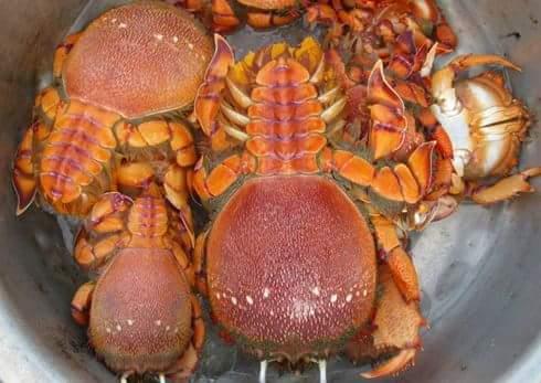 Đặc sản Cua Huỳnh Đế ở huyện đảo Lý Sơn  Đến Lý Sơn, bạn không thể bỏ qua những món hải sản...