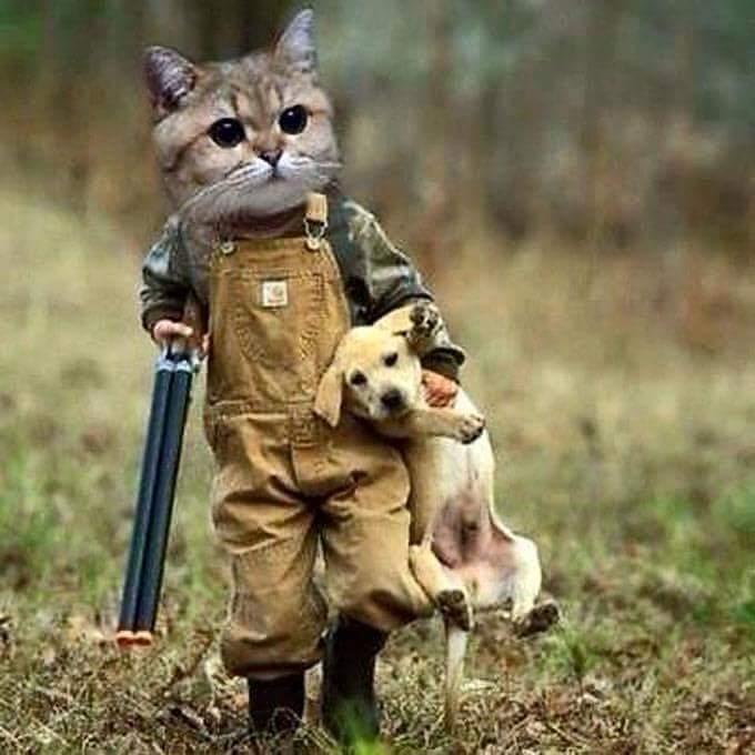 Con mèo dí súng vào đầu con chó rồi hỏi: - 1+1 = mấy? - Dạ! = 2 ạ! Pằng, con mèo thổi khói...