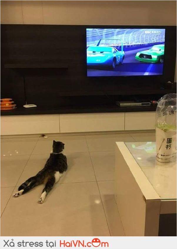 Đây là cách con mèo nhà em xem TV