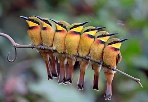 Một con chim đậu trên cành cây không bao giờ sợ cành cây gãy bởi vì niềm tin của con chim nằm...