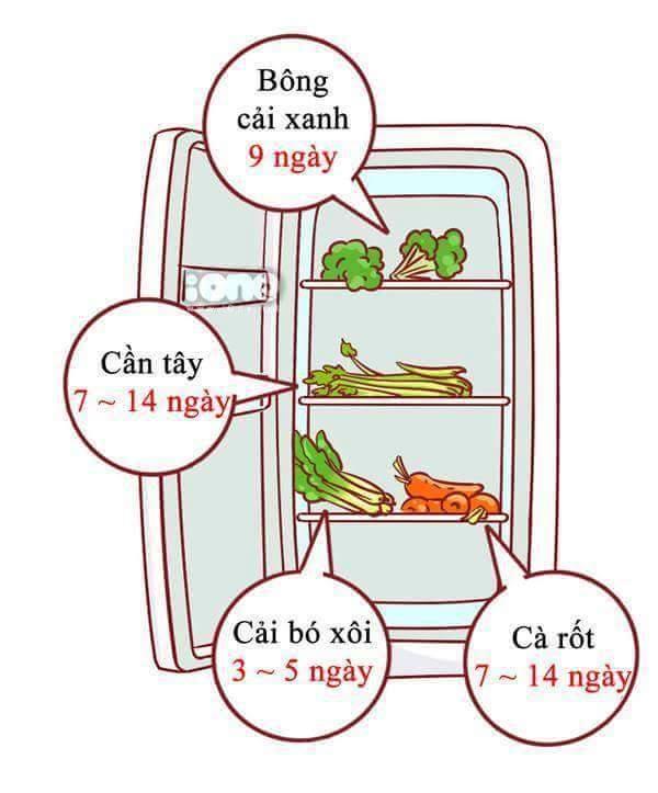 Nhiững thực phẩm hằng ngày có thể bảo quản trong bao lâu?  Chúng ta cùng xem...