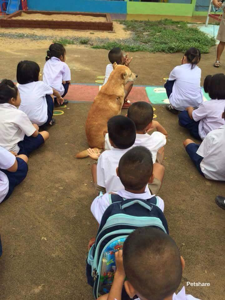 Thầy giáo hỏi cả lớp: - Lớp mình có thích đi tham quan ko? Học sinh áo vàng trả lời rõ to: -...