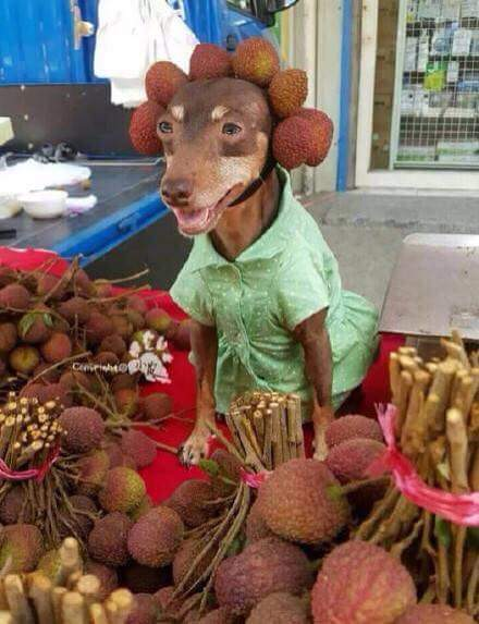 Ai mua hoa quả em bán cho nào ahihi