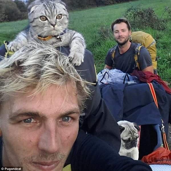 Cặp chó mèo béo cùng nhau đi khắp thế gian ahihi