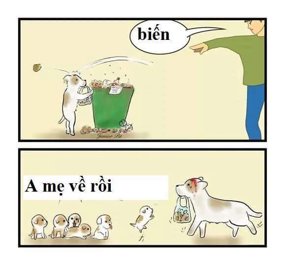 Đừng đánh đập mấy con chó Hoang nha. :( :( :(
