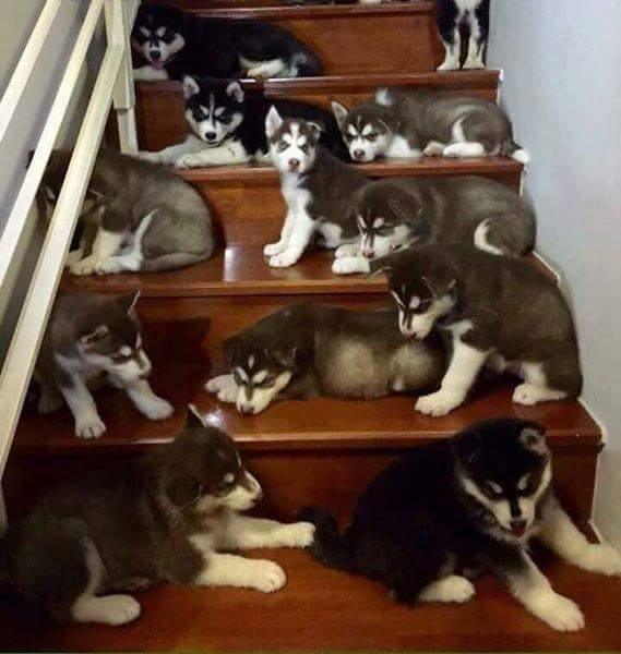 Tui chỉ ước 1 cầu thang đầy chó, một nông trường bát ngát à mà thôi. :v :v :v  ...