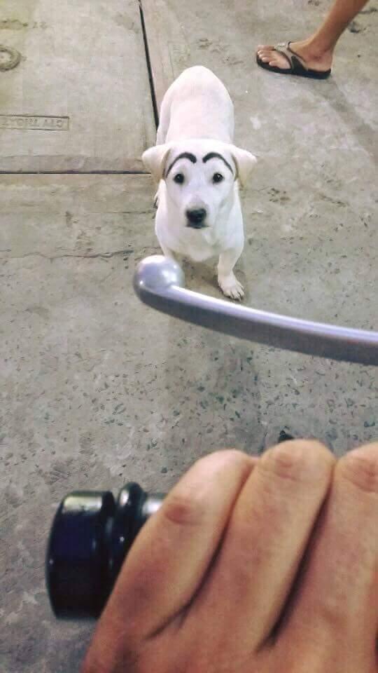 Sáng ra gặp chó nổi tiếng. :v :v :v