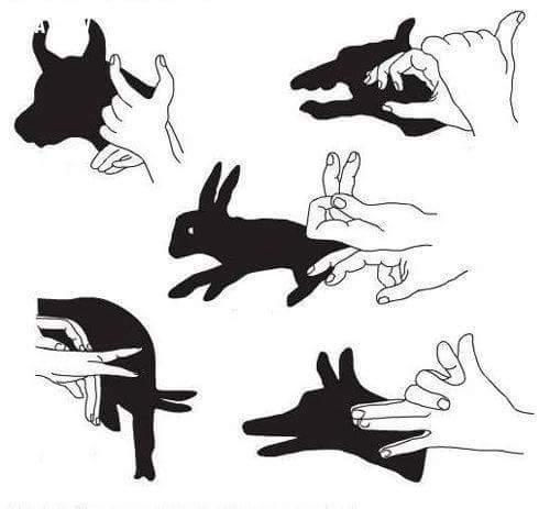 Tổng hợp các cách tạo bóng có hình động vật ngộ nghĩnh
