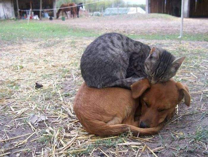 Một khi đã buồn ngủ thì đâu cũng là giường :3  Nguồn ảnh: Kiem