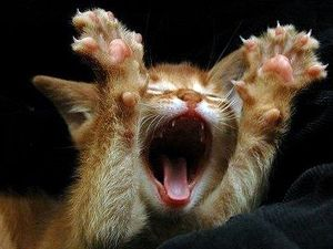 Причины агрессии у кошек