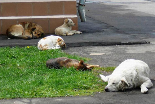 Блохи от бездомных собак