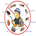 bedbug control by soreh fumigators