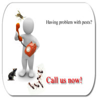 bedbug fumigation services in kenya