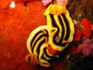 Marine snails