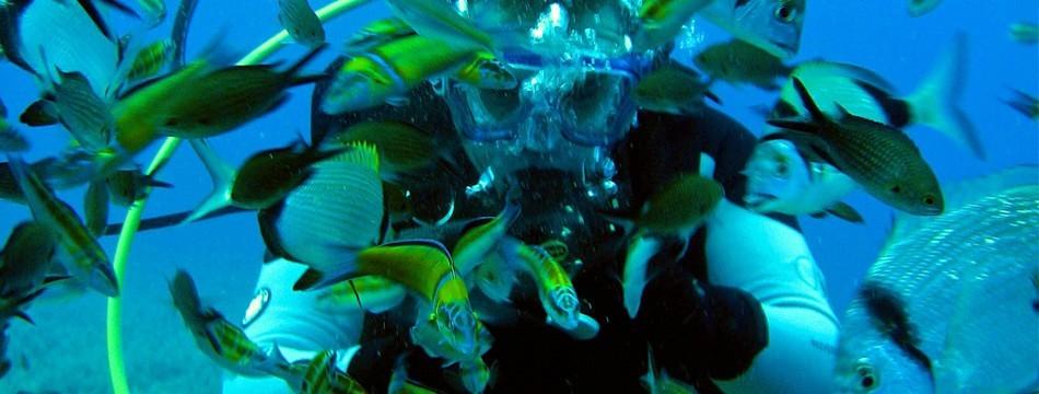 Scuba Diver diving in Paphos