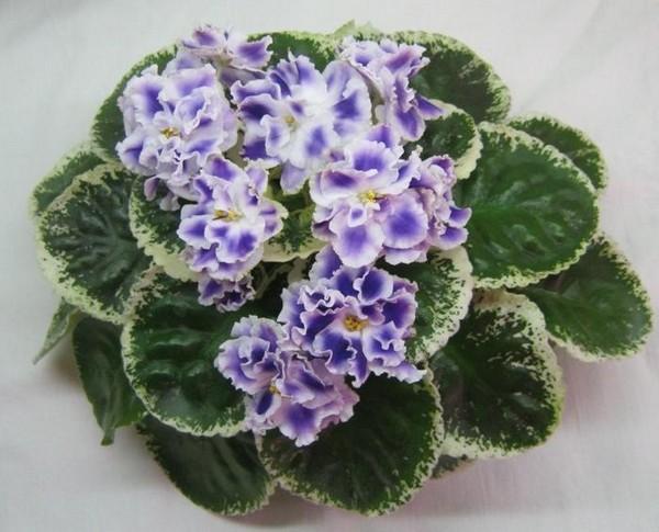 Очаровательный цветок