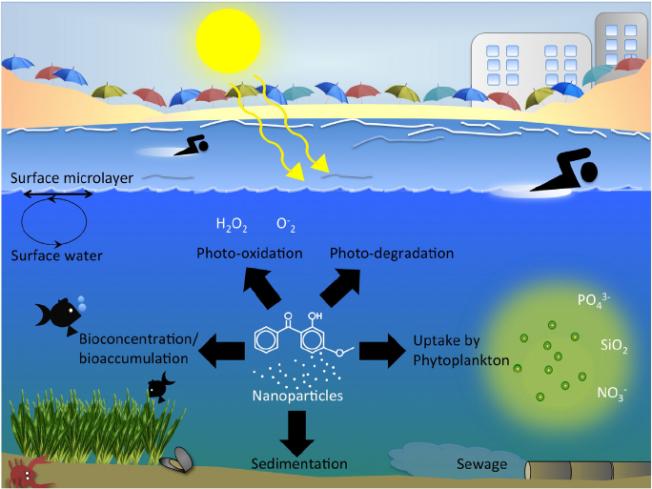 Les crêmes solaires, un danger pour les océans