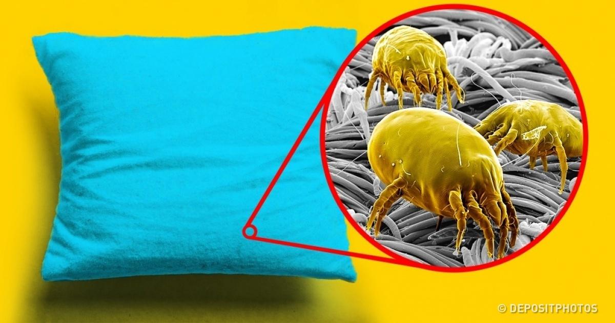 Как постирать подушки в домашних условиях