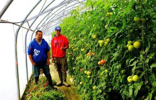 Бизнес в сельской местности с нуля
