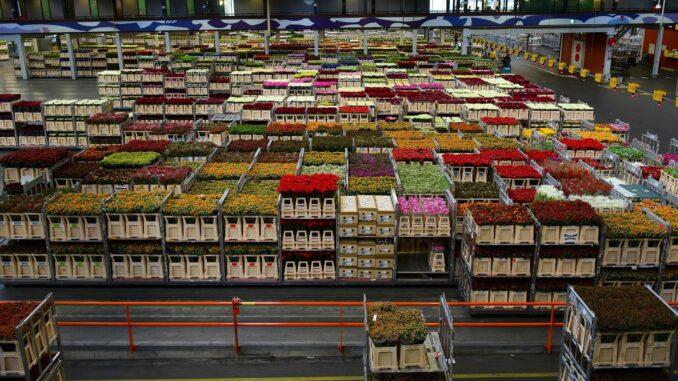 Как открыть оптовую базу продуктов питания