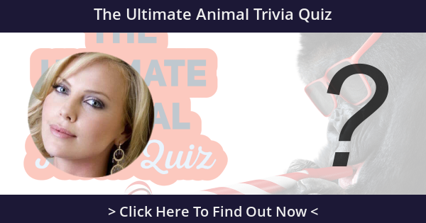 The Ultimate Animal Trivia Quiz