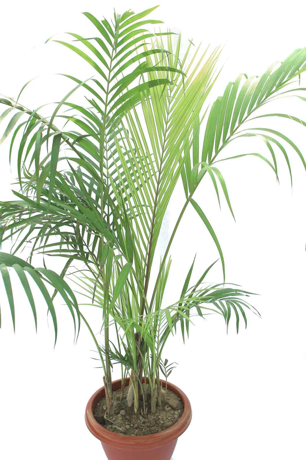 Indoor palm plants photo photo page hgtv easy to grow houseplants and suitable also for - Suitable indoor plants ...