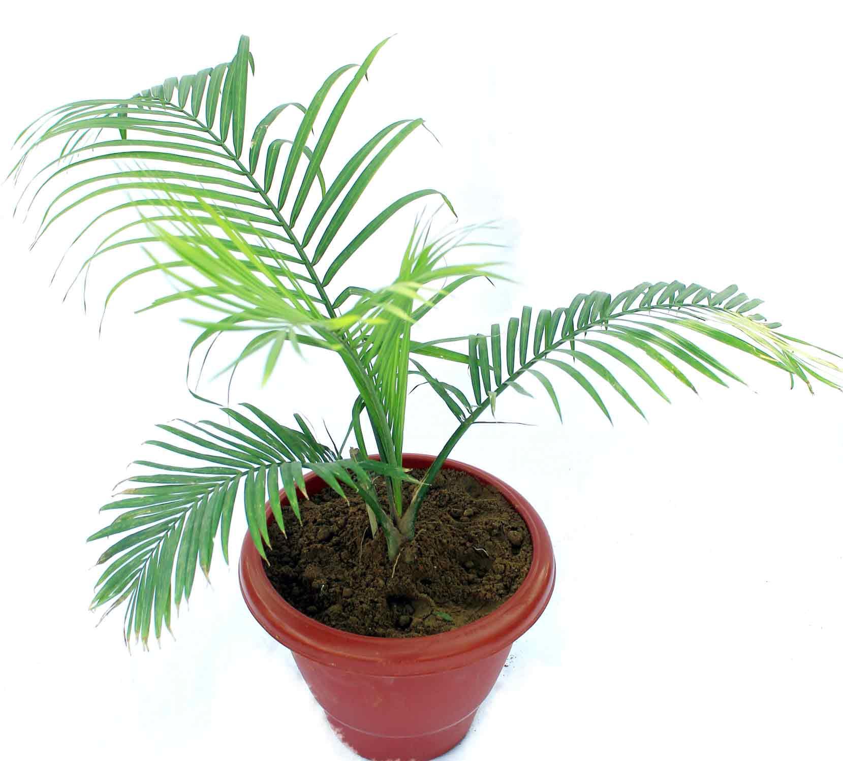 28 plants no sunlight all indoor plants buy all indoor - Plants that need no sunlight ...