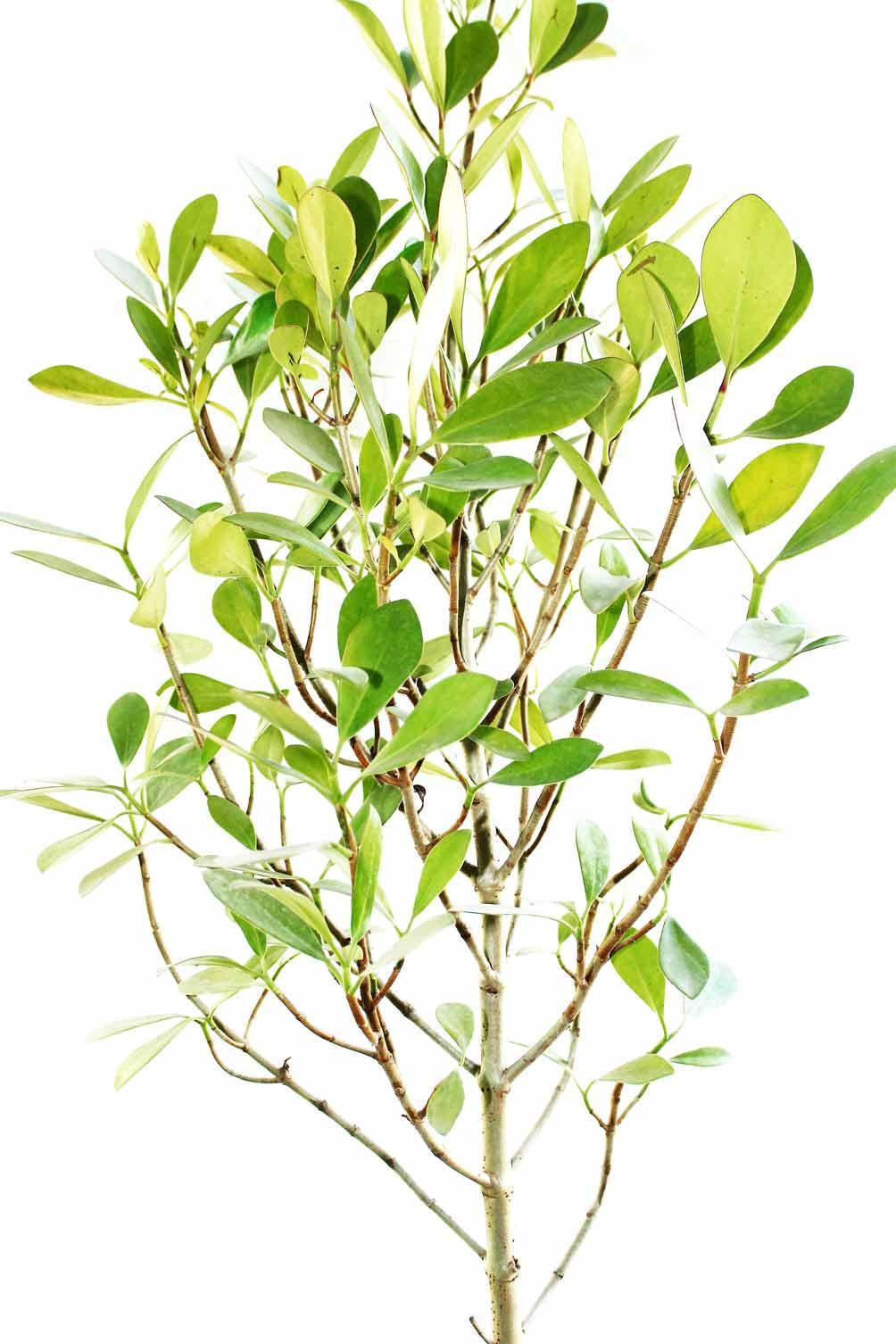 Best Plants For Living Room Part - 45: ... Best Plants For Living Room By Living Room Plants India Best Livingroom  2017 ...