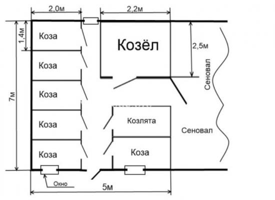 план козьей мини-фермы