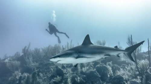 Sharks critical in restoring damaged ecosystems due to climate change, study shows