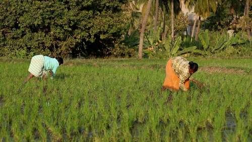 Jharkhand सरकार ने दी किसानों को बड़ी राहत, करीब 2.50 लाख का कर्ज किया माफ