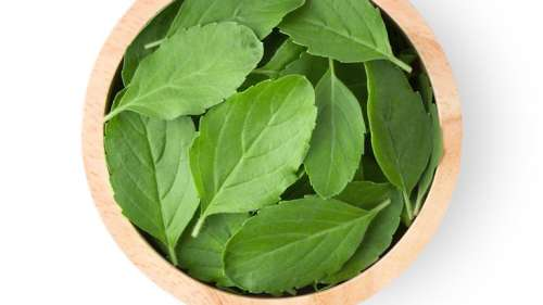The stress-busting benefits of tulsi