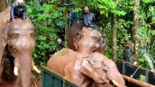 TN Forest department rescue injured jumbo Silver from Gudalur