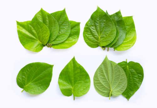 Betel leaves for gut health