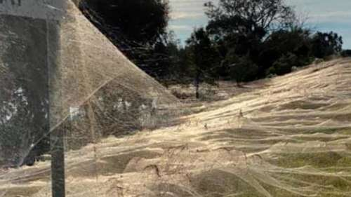 Watch: Giant spiderwebs cover Australian town after flood